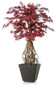 Maple Root Mini 150 cm Burgundy
